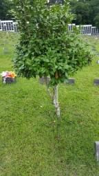 Oportunidade terreno cemitério Bonfim