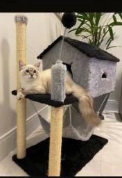 Arranhador casa para gatos e arranhador pequeno pena