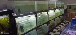 Bateria de aquário