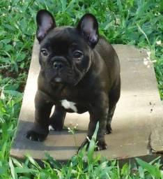 Oportunidade! Adestramento de Cães de Guarda em domicilio - Todas as Raças