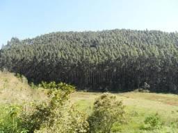 Vale do Paraíba tem! Fazendas com eucalipto!