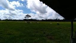 Fazenda Pará,325 hectares, 200 hectares de pasto, 1,5 milhões prox.do porto de Barcarena