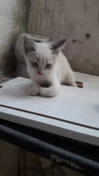 Gato macho para doação.