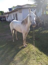 Égua pra venda ou rolo