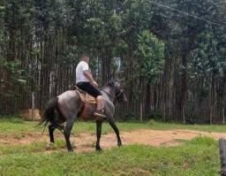???MUITO BARATO??                vendo cavalo ? marchador muito bom