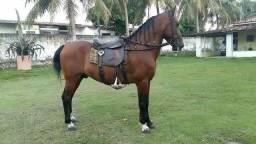 Cavalo Manga-larga Machador