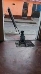 Estou doando essa cachorra, muito carinhosa. motivo viagem não posso levá ela