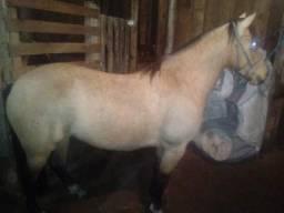 Vendo egua marcada mansa nova de freio