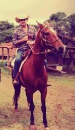 Vendo cavalo mangalarga, bom de andamento dócil .