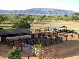 Fazenda buritis de Minas 112 hec margens do urucuia