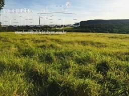 Fazenda 40 Alqueirao Pecuaria