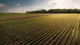 Procuro fazendas para arrendar para agricultura no Mato Grosso do Sul