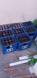 8 caixa de cerveja litrao, casco vazio com 12.