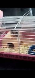 Hamster chinês