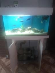 Aquario com preto com