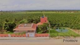 Excelente Sitio de Laranja na Colonia Treze em Lagarto