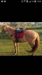 Cavalo com acessórios e charrete