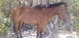 Uma besta e um cavalo