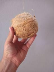 Coco seco selecionados