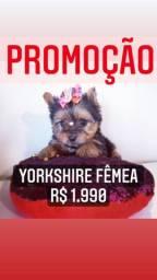 Yorkshire fêmea R$1.990