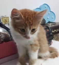Gatinhos amarelinho e pretinho para adoção
