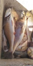Pescaria e passeio na baia de Sepetiba