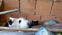 Adoção para gatos filhotes urgente! .