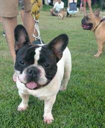 Tenha controle total do seu melhor amigo - Adestramento de Cães em Domicilio