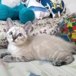Gato - Filhote Macho - 2 meses - adoção responsável