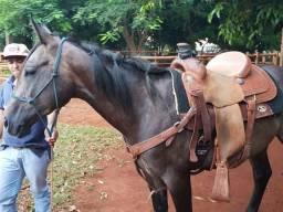Vendo cavalo potro
