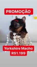 Promoção Yorkshire Macho