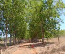 Imperdível! Fazendinha 20.000 m² planas, com riacho e terra boa de cultural! TTR
