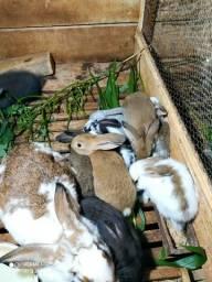 Filhotes coelhos