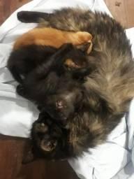 Doase 2 gatas e 1 gato