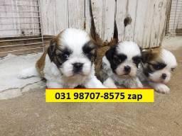 Canil BH Pet Shihtzu Lhasa Maltês Yorkshire Basset Poodle Beagle Pinscher Labrador Golden