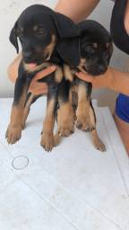 Filhotes de cachorro para adoção
