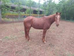 Vendo cavalo e égua