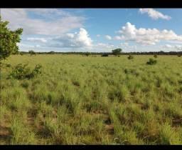 Terra no lavrado - para grãos - 2200 hectares