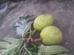Frutapao