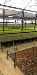 Mudas para hortinhas e pimentas produzindo.
