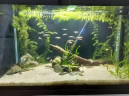 Aquario completo 150litros