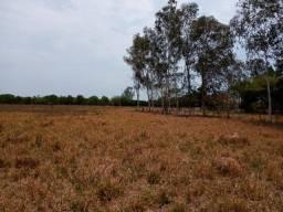 Vendo Fazenda para pecuária próxima de Cuiabá com 107 hectares