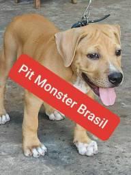 Monster Brasil