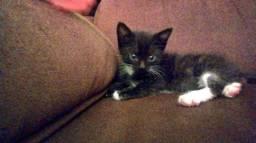 gatinha filhote para doação