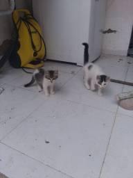 Filhotes de gatos pra adoção