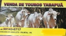 TOURINHOS TABAPUÃ A VENDA