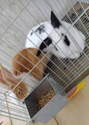 2 coelhos machos já com a gaiola