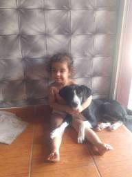 Doa-se cachorra Maya