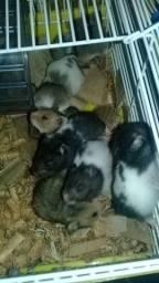 Hamster e Gerbil