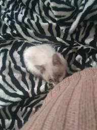 Gatinho filhote para adoção